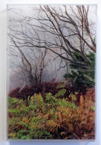 """Appalachian Trail, Vermont"", 2007, 12""x 16"" x 2"""